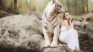 ホワイトタイガーと女性